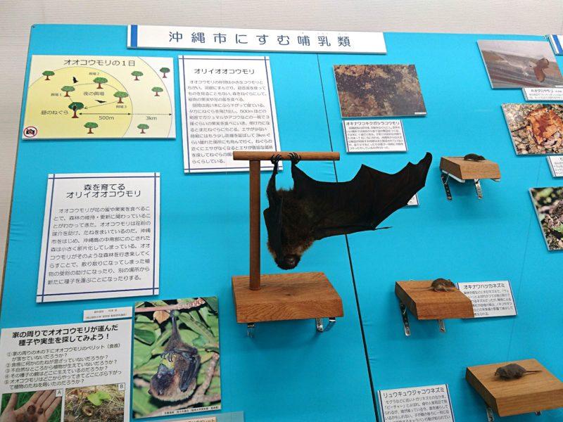 沖縄市立郷土博物館の展示品
