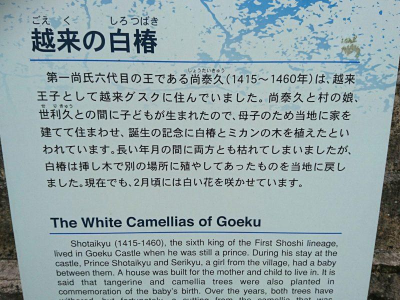 沖縄市越来の白椿