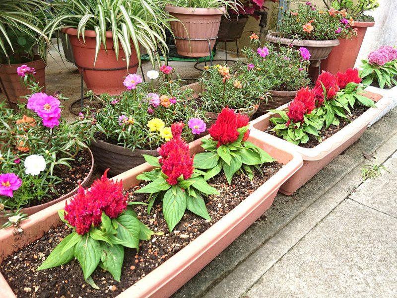 沖縄市民宿久保田荘の花