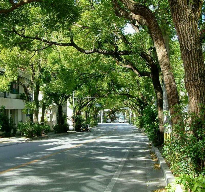 沖縄市くすのき通り