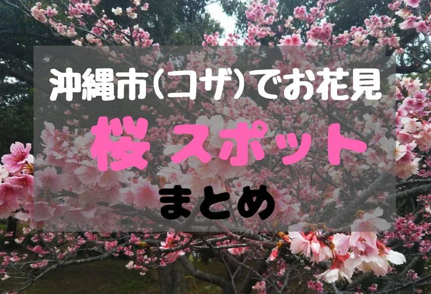 沖縄市の桜・お花見スポット