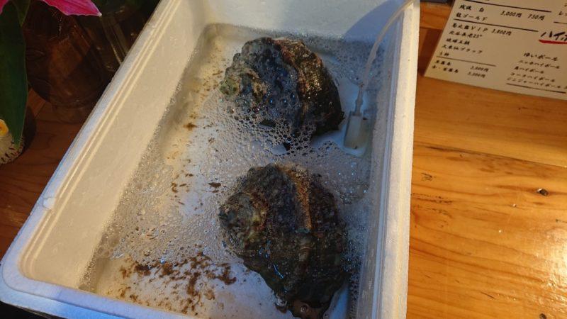 沖縄市高原酒と肴ゆいまぁーるの貝