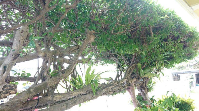 カフェがじゅまるの木沖縄市比屋根の外観