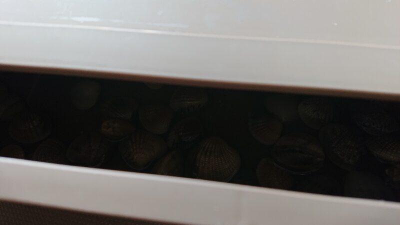 アサリを入れた容器のフタ